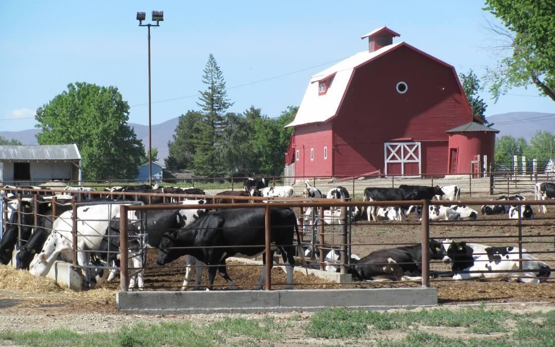 Cattle Ranch Propane